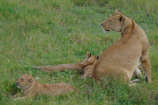2 Day Safari to Lake Manyara and Ngorongoro Crater