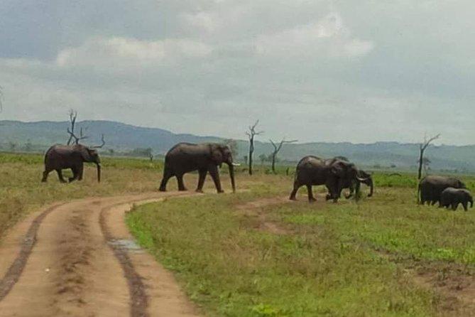13 days, southern Tanzania Safari,Selous Game reserve and Ruaha National Park