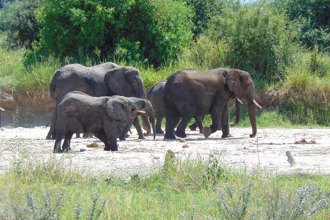3 Day Safari to Tarangire, Lake Manyara and Ngorongoro Crater