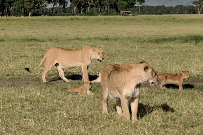 4 Days Lake Nakuru & Masai Mara private tour