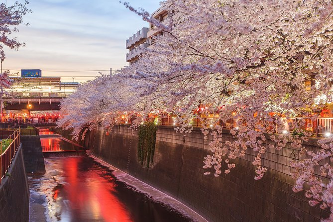 Evening Hanami (Cherry Blossom) Experience with a Local photo 6