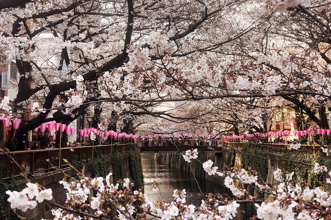 Evening Hanami (Cherry Blossom) Experience with a Local photo 3