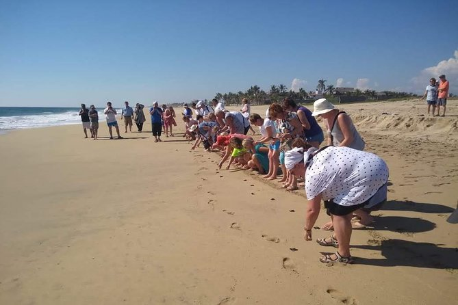 Acapulco City Tour and Turtle Release