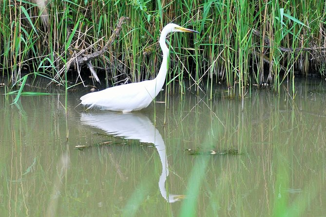 Private Bird Watching Group Tour in Unique Nature Reserve