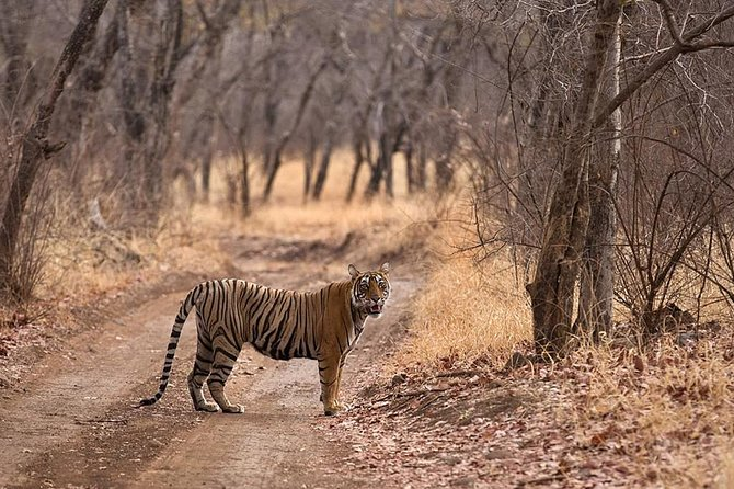 Same Day Ranthambore From Jaipur photo 1