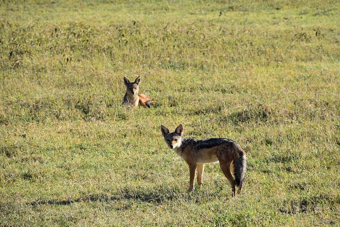 2 Days Tanzania Safari (Tarangire & Ngorongoro) With Africa Natural Tours Co LTD