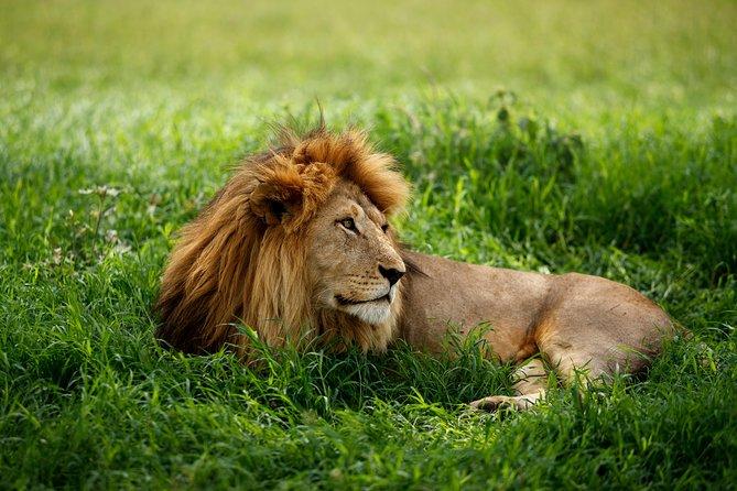7 Days Classic Lodge Safari in Tanzania