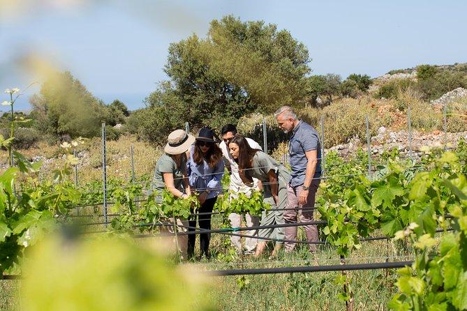 Private Heraklion Wine Country Tour
