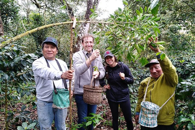 Coffee plantation tour full day
