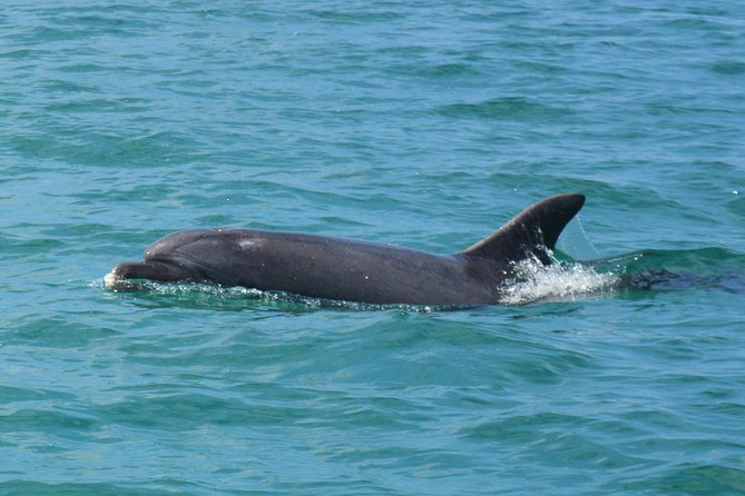 Full Day Private Tour - Dolphin Watching and Secret beaches of the Arrábida!