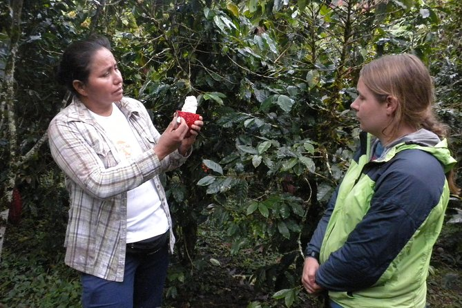 Coffee or Cocoa tour and Machu Picchu 2d/1n photo 8
