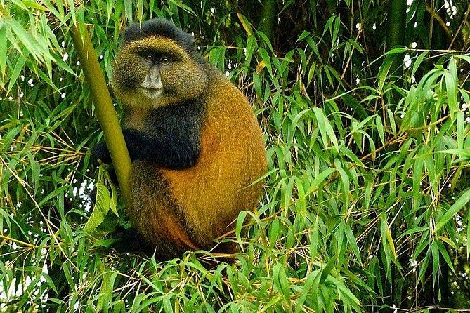 Rwandan Adventure Safari 6 Nights / 7 Nights