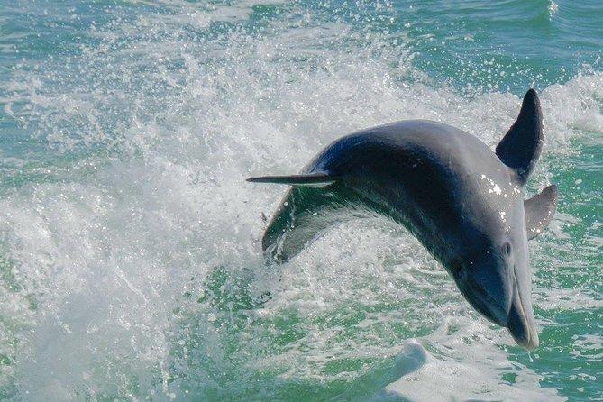 Egmont Key Snorkeling Dolphin Tour