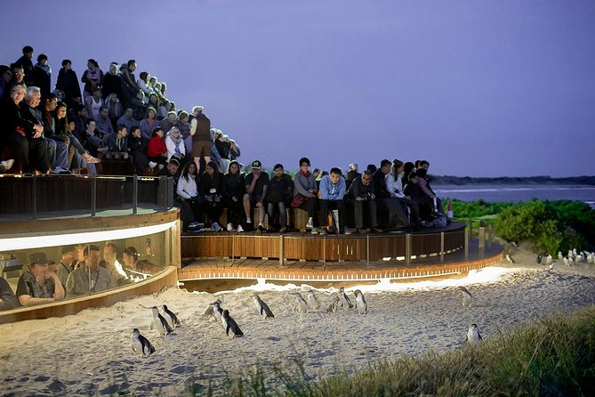 Phillip Island and French Island Wildlife Expedition