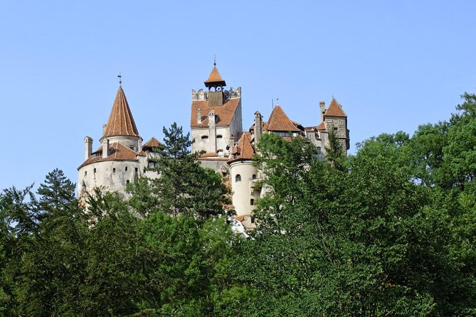 One day trip Bear Sanctuary, Dracula Castle, Rasnov Fortress from Brasov photo 7