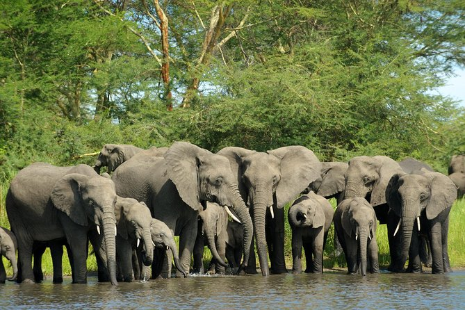 Elephants are available in Akagera National park