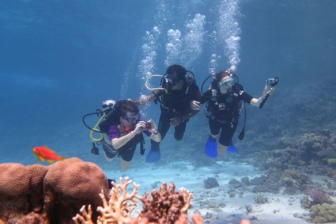 Padi Scuba Diving In Marsa Alam
