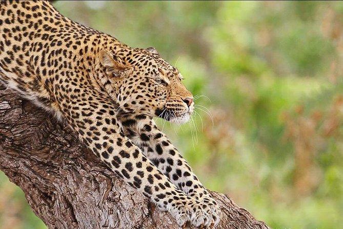 7 Days Join Group Migration Safari