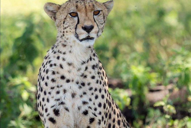 2 Days Budget Lodge Safari Tour Tanzania