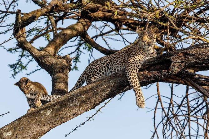 Tarangire National Park Day trip Safari
