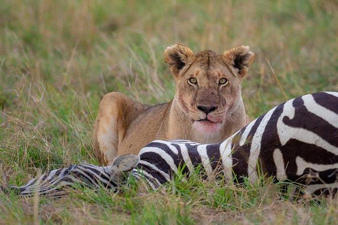 11 Days Safari Tour Tanzania