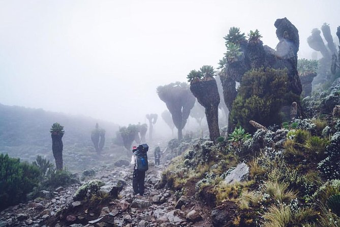 Mountain Kilimanjaro Climbing 7 Days Umbwe Route