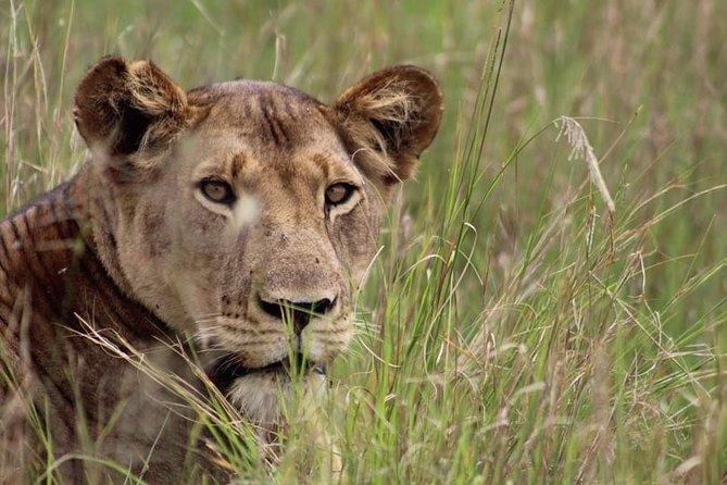3 Days Camping Safari Tour Tanzania
