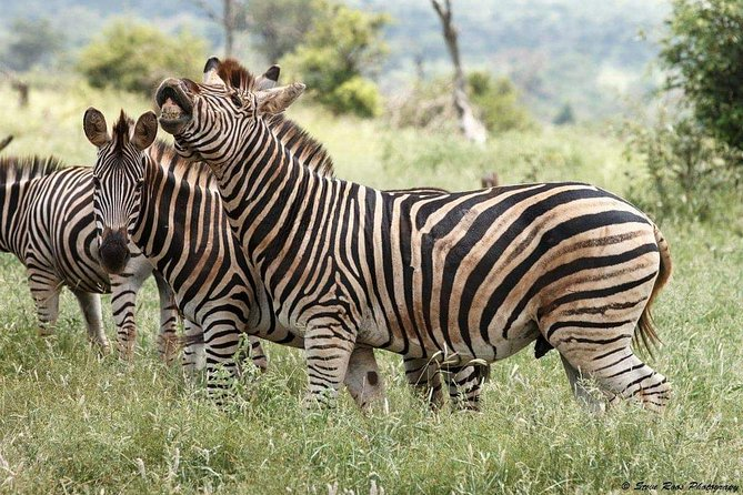4 Days Luxury Lodge Safari Tour Tanzania photo 1