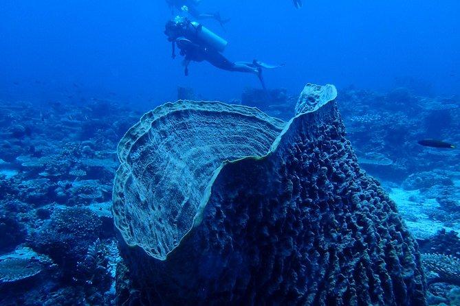 Boracay Discover Scuba Diving