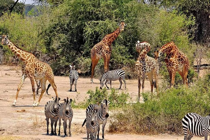 9 Days Join Group Safari Tour Tanzania