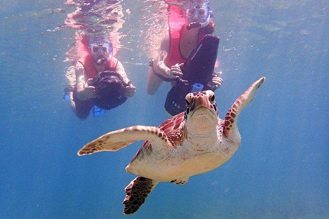 Turtle Beach Power Snorkeling Adventure