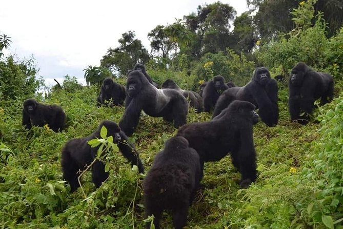 Gorilla trekking &wildlife adventure in Rwanda