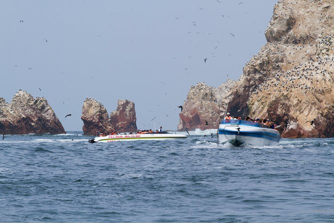 Ballestas Islands + Paracas National Reserve from Lima (Small group) photo 11
