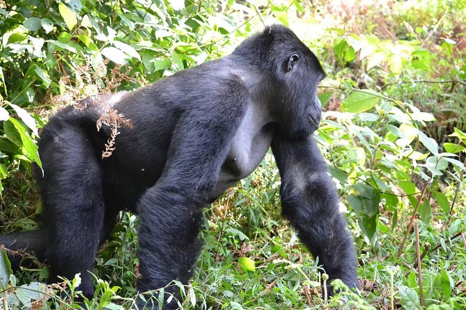 3 Day Gorilla Trekking Experience photo 2