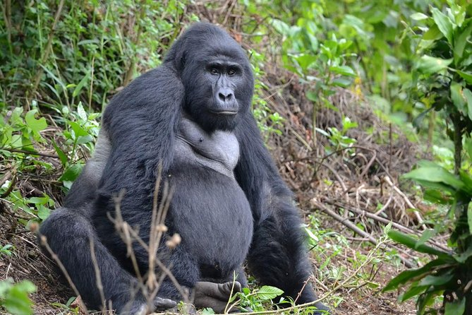 3 Day Gorilla Trekking Experience photo 3
