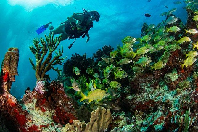 Aquaworld's Discover Scuba