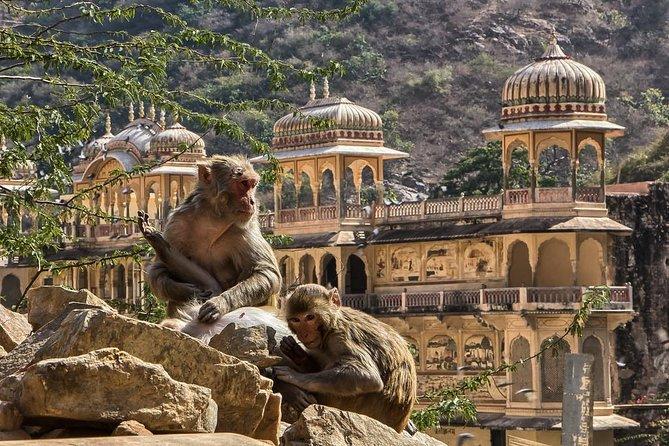 Jaipur City Glory Full Day Tour