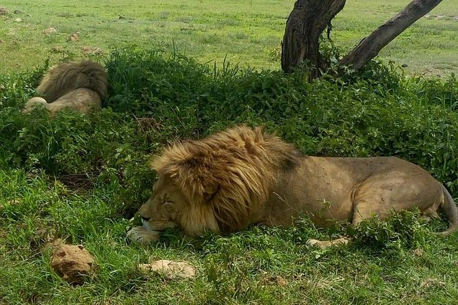 5 Days Join Group Safari Tour Tanzania