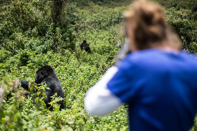 Bwindi Gorilla Trek and Guided Savannah Bush Walk - 5 Days