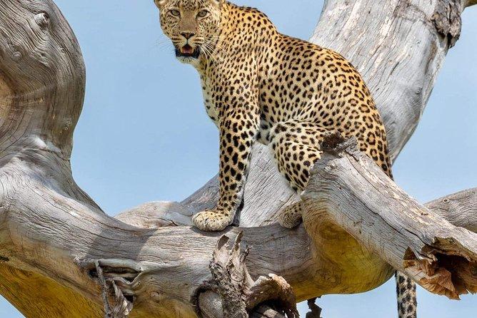 6 Days Joining Safari Tour Tanzania