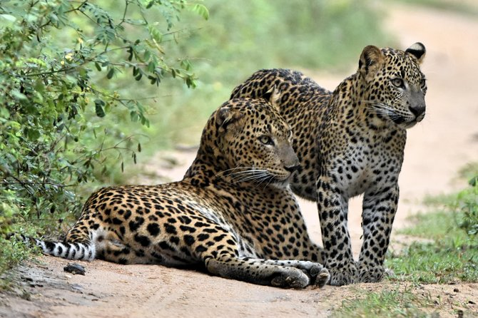 YALA National Park - Private Safari Tour