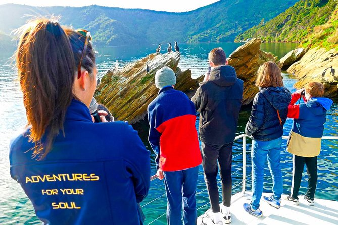 Marlborough Sounds Ultimate Cruise