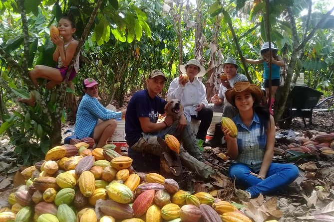 Chocolate Tour (cacao plantation)