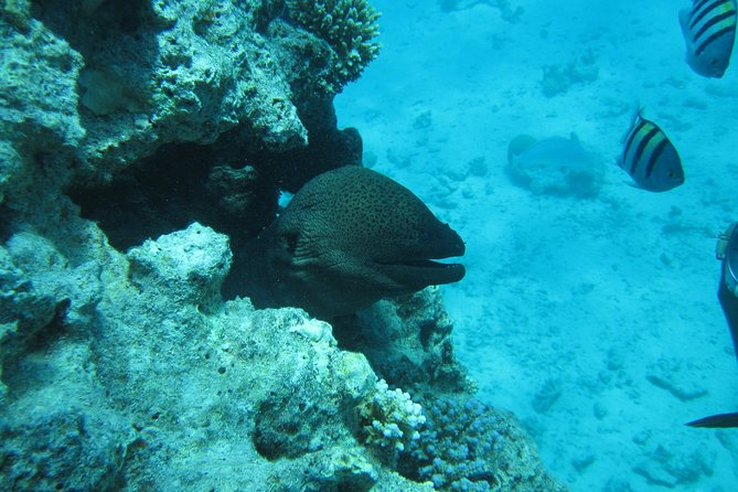 Special Dolphin House VIP snorkeling Sea Trip - Hurghada photo 7