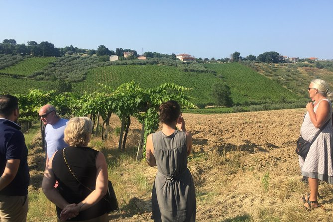 Knowledge, passion and love for the earth Walk through the vineyards taste the wines