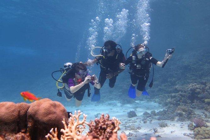 Padi Scuba Diving In Marsa Alam
