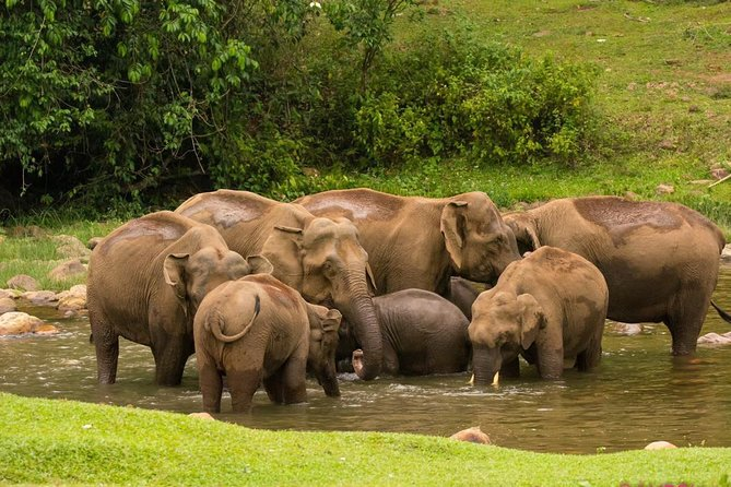Wild Elephant Village( Anakulam) Visit ( full day village jeep tour)