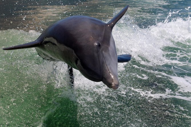 Private Dolphin Tour & Visit Shell Key Preserve- Snorkel, Shell and Swim!