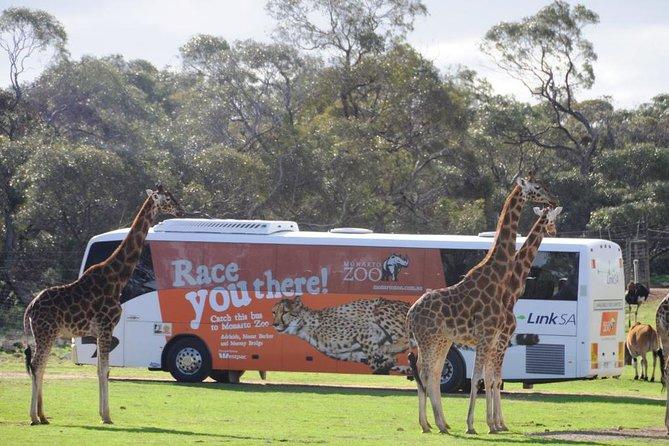 Monarto Zoo Bus transfers from Adelaide City