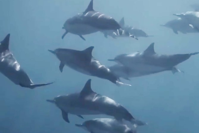 Snorkeling Dolphins And Hot spring